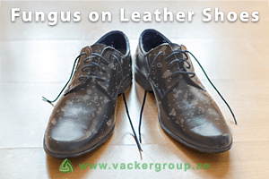 fungus-on-leather-shoes