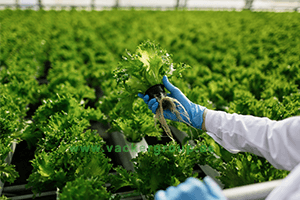 agriculture-engineering-agtech-solutions-vackerglobal