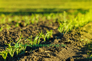 agriculture-engineering-solutions-vackerglobal