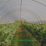 green-house-humidifier-in-dubai-uae