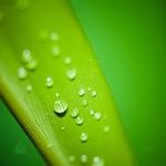greenhouse-humidifier-vackerglobal-dubai